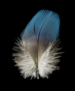 Unknown Parrot Feather